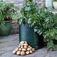 Bargain Patio Potato Planter