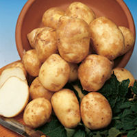 Pentland Javelin Seed Potatoes
