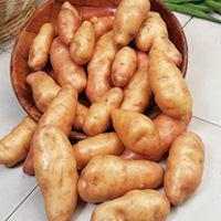Pink Fir Apple Seed Potatoes