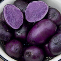 Purple Majesty Seed Potatoes