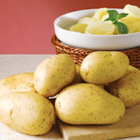 Vivaldi Seed Potatoes