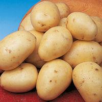 Winston Seed Potatoes